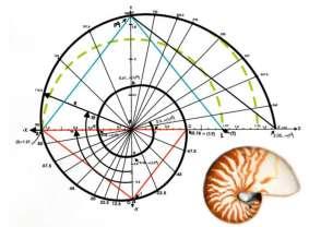 nautilus ratio
